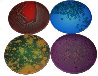 Petri Dish Glass Coasters set of 4