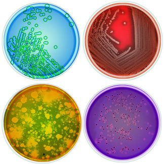 petri dish glass coasters