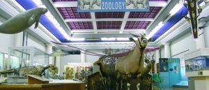 Hunterian Zoology Museum